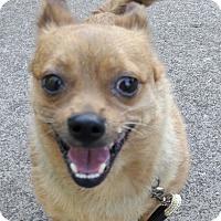 Adopt A Pet :: Radar - Salem, OR