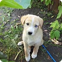 Adopt A Pet :: Violet - Regina, SK