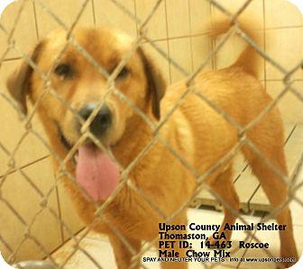 Chow Chow Mix Dog for adoption in Thomaston, Georgia - Roscoe