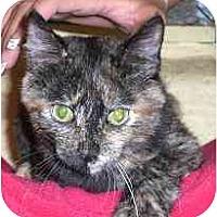 Adopt A Pet :: Twilight - Lombard, IL