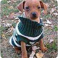 Adopt A Pet :: Murphy - Florissant, MO