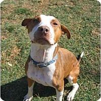 Adopt A Pet :: Samantha - Bakersfield, CA