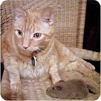 Adopt A Pet :: Joey - Alexandria, VA