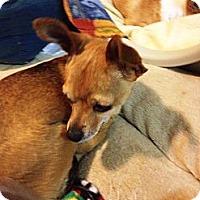 Adopt A Pet :: Willow - Poulsob, WA
