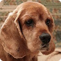 Adopt A Pet :: Tomas - Brant, ON