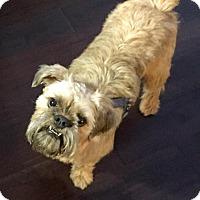 Adopt A Pet :: McGYVER - ADOPTION PENDING - Seymour, MO