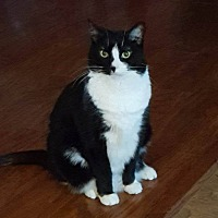 Adopt A Pet :: Paige *Courtesy Posting* - Saranac Lake, NY