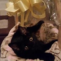 Adopt A Pet :: Melanie - Chino, CA