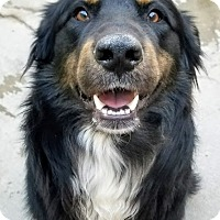 Adopt A Pet :: Jameson(ADOPTED!) - Chicago, IL