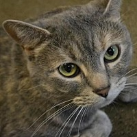 Adopt A Pet :: Penny - Akron, OH