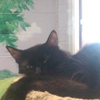 Adopt A Pet :: Blitzen - Columbia, SC