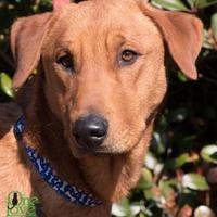 Adopt A Pet :: Wiley - Savannah, GA