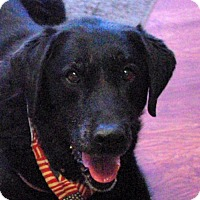 Adopt A Pet :: Onyx - Longview, WA