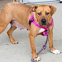 Adopt A Pet :: Gypsy *SWEETEST DOG ON THE PLANET* - Clarkston, MI