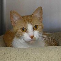 Adopt A Pet :: Lala - Batavia, NY