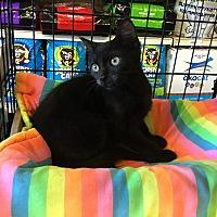 Adopt A Pet :: Afton - Gilbert, AZ