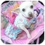 Photo 1 - Chihuahua Mix Dog for adoption in Mission Viejo, California - DAISEY MAE