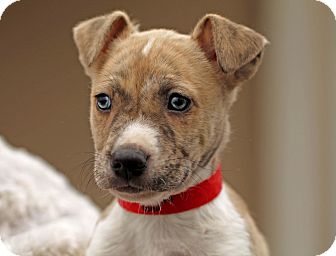 Retriever (Unknown Type) Mix Puppy for adoption in Marietta, Georgia - Cabelo