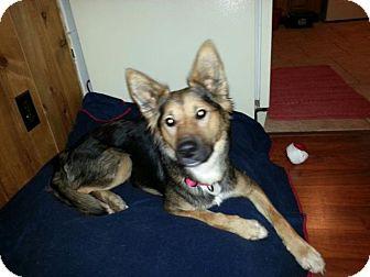 German Shepherd Dog/Terrier (Unknown Type, Medium) Mix Dog for adoption in Winston-Salem, North Carolina - Nonya