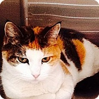 Adopt A Pet :: Nutmeg - Webster, MA