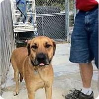 Adopt A Pet :: Nina - miami beach, FL