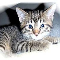 Adopt A Pet :: Chance - Montgomery, IL