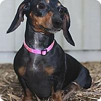 Adopt A Pet :: Skittles - North Palm Beach, FL