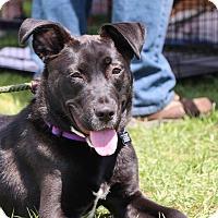 Adopt A Pet :: Haddie - Rockaway, NJ