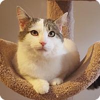 Adopt A Pet :: Charles - Mount Clemens, MI