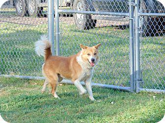Australian Shepherd Mix Dog for adoption in Lufkin, Texas - Jamboree