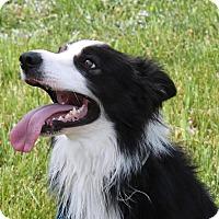 Adopt A Pet :: Brody - Lebanon, CT