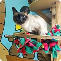 Adopt A Pet :: Jezzie - West Des Moines, IA
