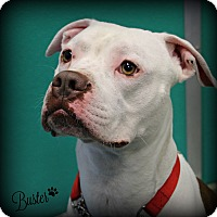 Adopt A Pet :: Buster - Dunkirk, NY