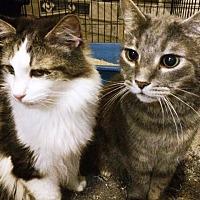 Adopt A Pet :: Diamond & Mick - Riverside, CA