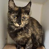 Adopt A Pet :: Christina - Atlanta, GA