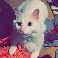 Adopt A Pet :: Milo - Cerritos, CA