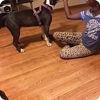American Pit Bull Terrier Dog for adoption in Memphis, Tennessee - Allie