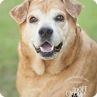 Adopt A Pet :: CARMELLA - Chandler, AZ