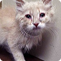 Adopt A Pet :: ADOPTED!!!   Colby - Oswego, IL