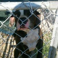 Adopt A Pet :: mandy - Opelousas, LA