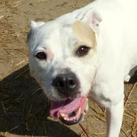 Adopt A Pet :: Roxy - Valley View, OH
