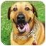 Photo 1 - Labrador Retriever/Hound (Unknown Type) Mix Dog for adoption in Berkeley, California - Sphere
