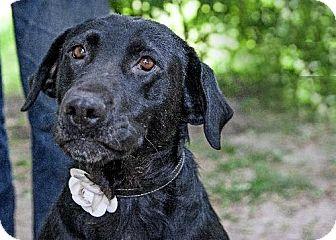 Labrador Retriever Mix Dog for adoption in Gregory, South Dakota - Ginger