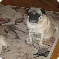 Adopt A Pet :: Frankie Joe - Strasburg, CO