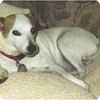 Adopt A Pet :: Sparkle - Scottsdale, AZ