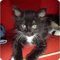Adopt A Pet :: Bernadette - Davis, CA