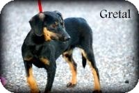 Chihuahua Mix Puppy for adoption in Grand Bay, Alabama - Gretel