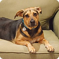 Adopt A Pet :: Mally - Knoxville, TN