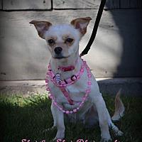 Adopt A Pet :: Scarlett - Lodi, CA