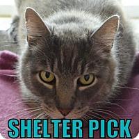 Adopt A Pet :: Henry - Eugene, OR